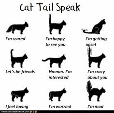 List of ways to tell how a cat feels