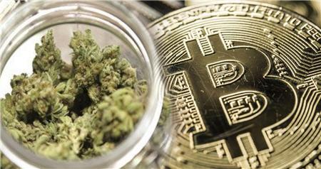Bitcoin 420 Pot Crypto